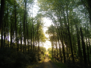 forest-of-dunbrody